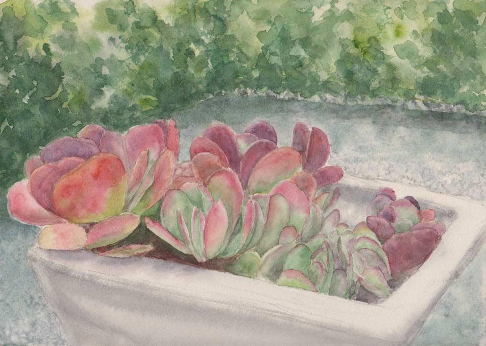 Paddle Plant (Watercolour)
