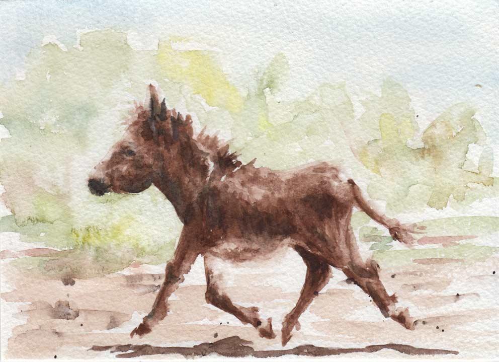 Donkey (Watercolour)