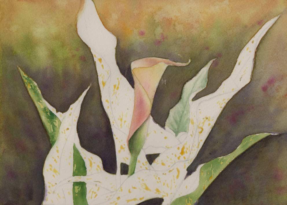 Zantedeschia (Watercolour)