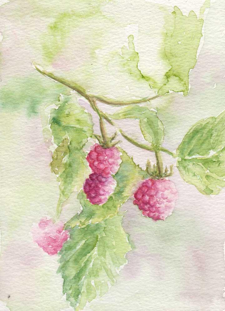Fresh Raspberries (Watercolour)
