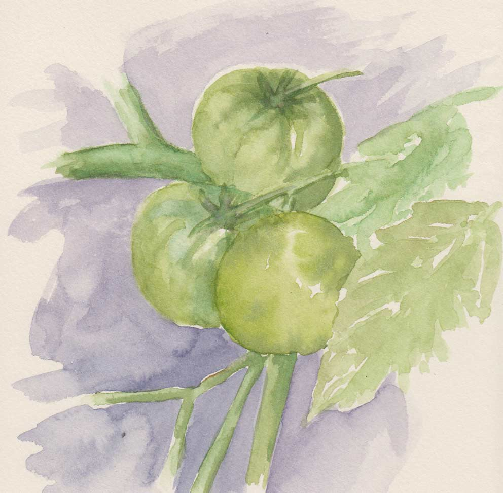 Green Tomatoes (Watercolour)