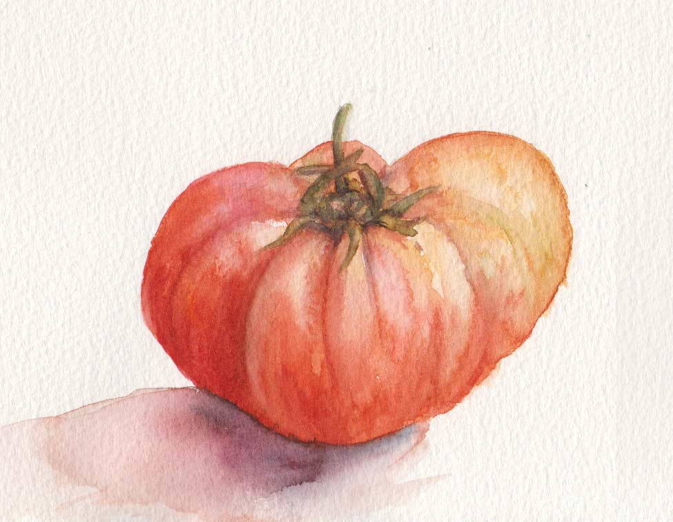 The First Tomato (Watercolour)