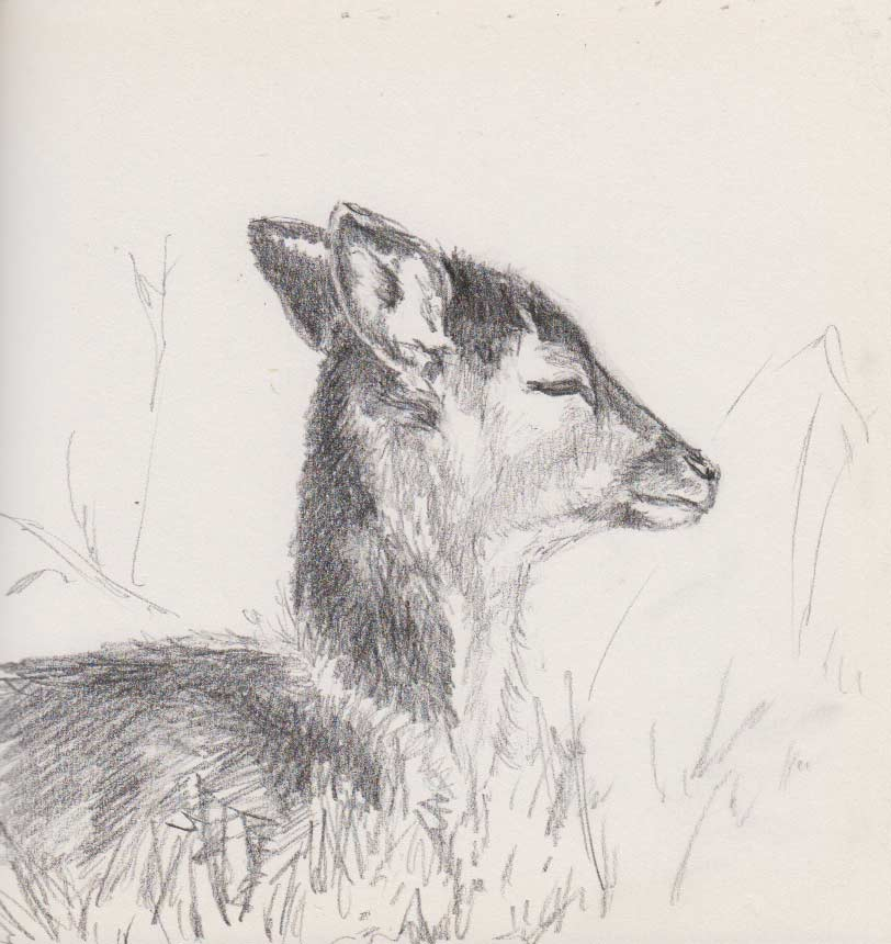 Fallow Deer Hind (Graphite)