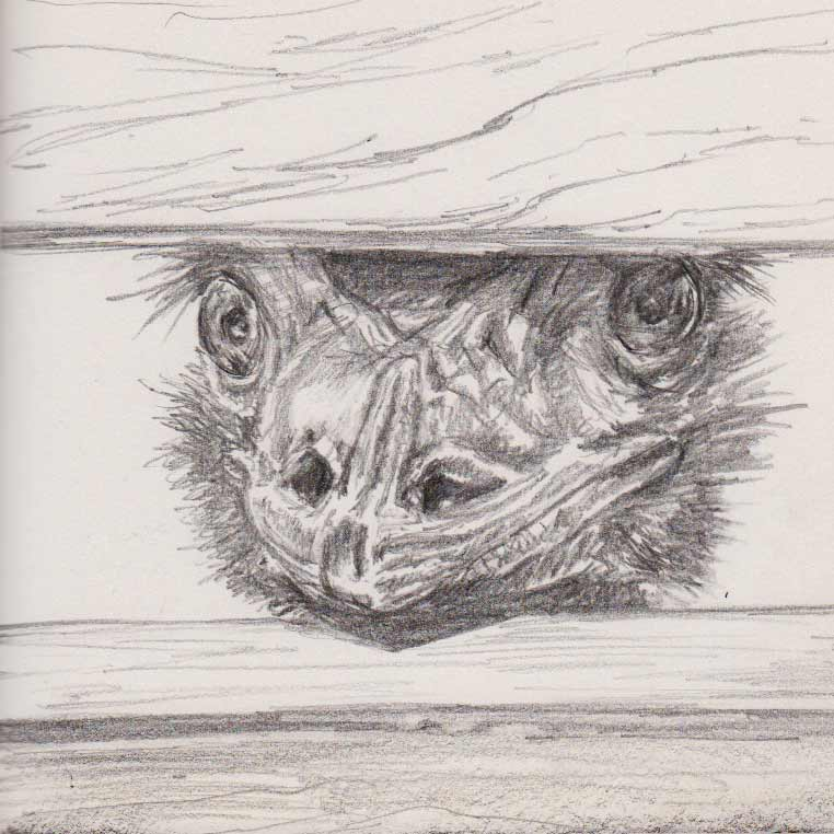 Nosy Emu (Graphite)