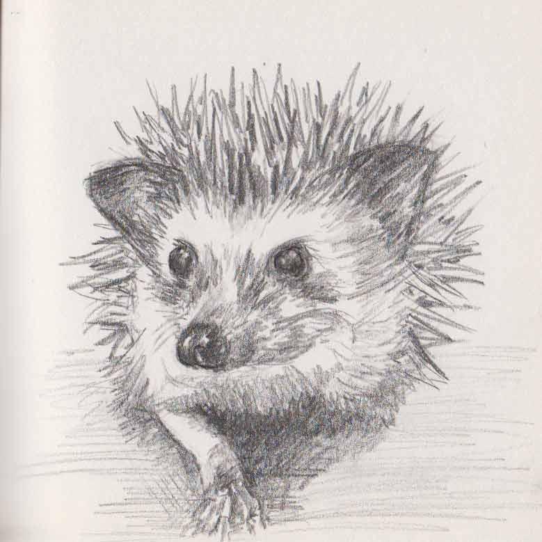 Hedgehog (graphite)