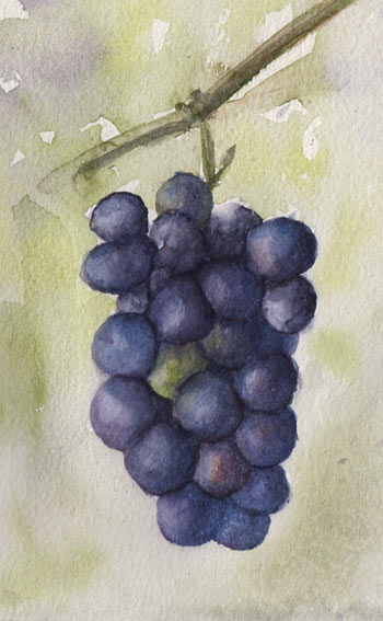 Black Grapes (Watercolour)