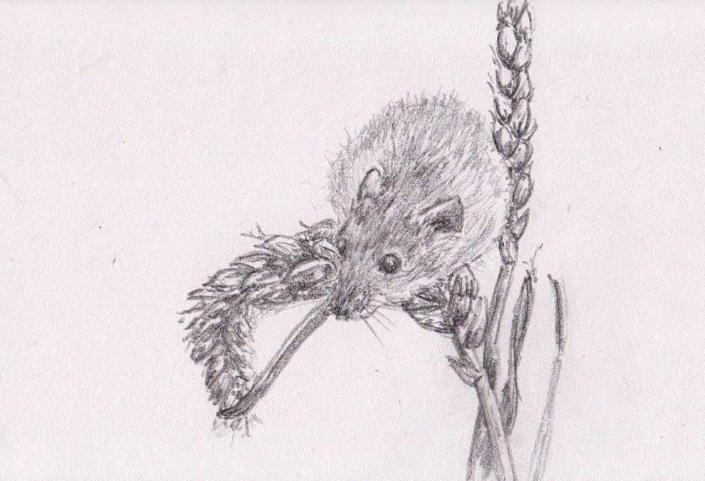 Harvest Mouse (Graphite)