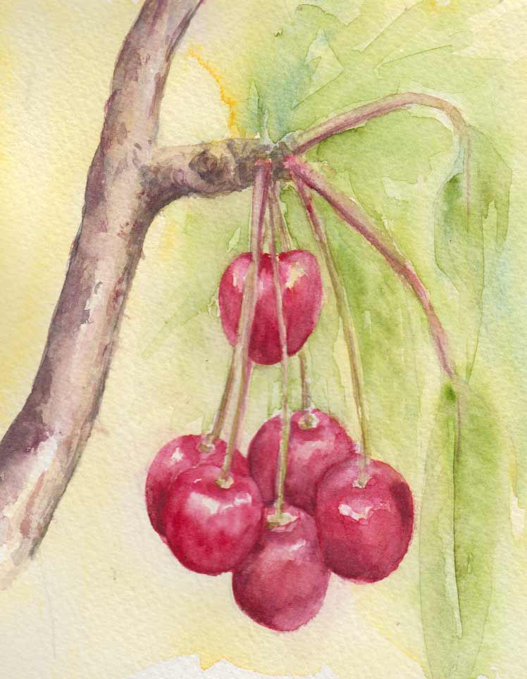 Ripe Cherries 2 (Watercolour Sketch)