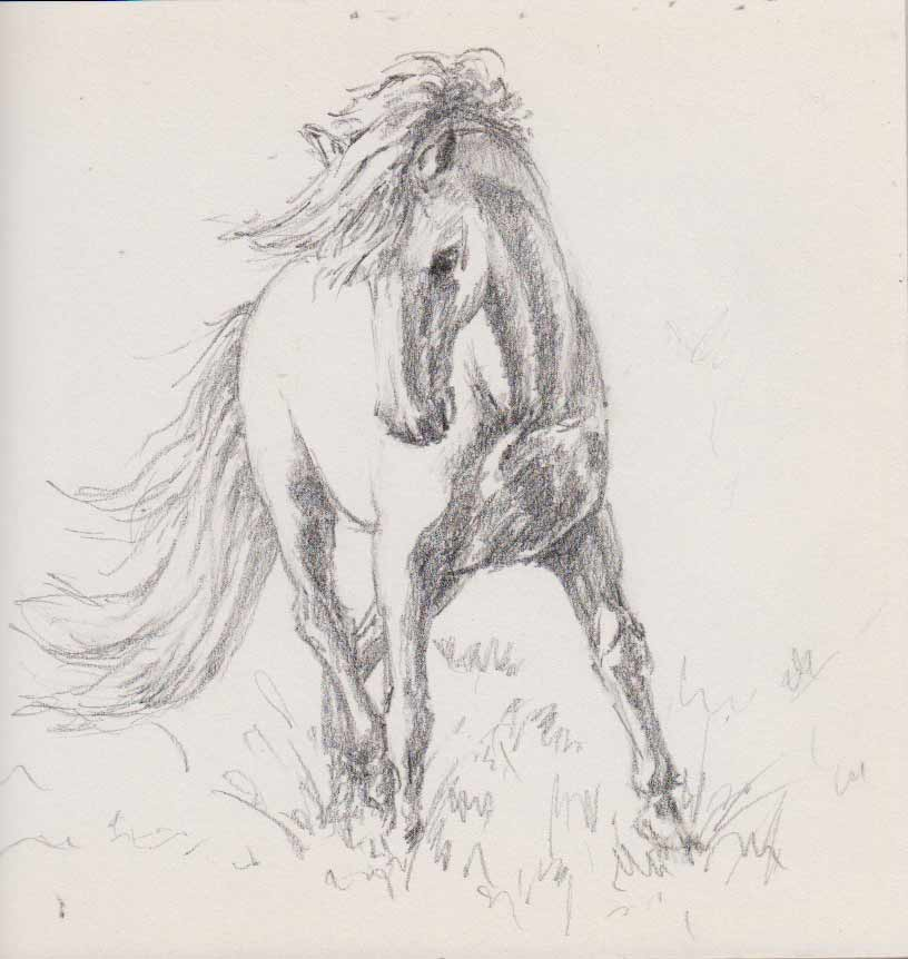 Prancing Pony (Sketch)